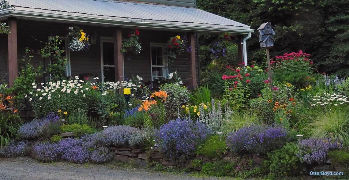 Muskoka perennial cottage garden flowers