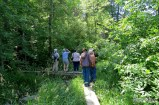 Ron Payne's group looking for Swallows from the crooked bridge
