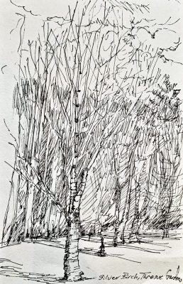 Silver Birch, Threave Gardens_Sketchbook