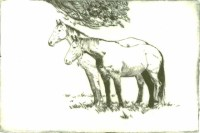 Chestnut Horses - Dry Point