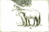 Chestnut Horses - Dry Point