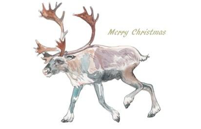 201612-christmas-reindeer-merry001-2