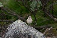 95-Främmande-fågel