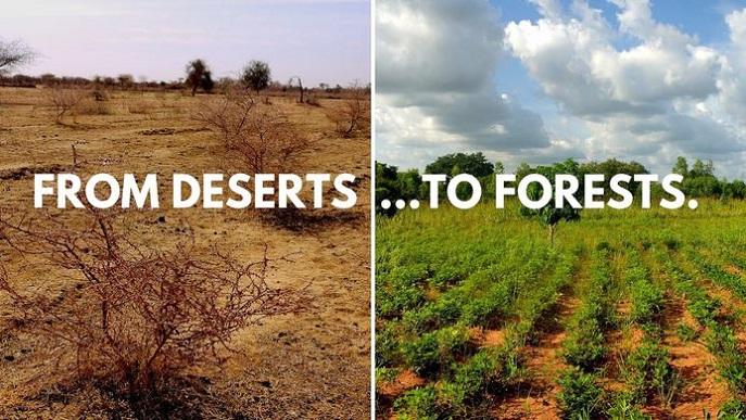 Ecosia'nın Burkina Faso'da yaptığı fidan dikme çalışması öncesi sonrası