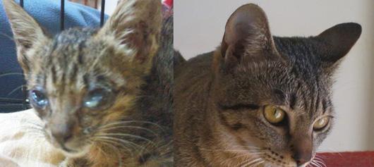 Эта кошка страдала от ужасной глазной инфекции - посмотрите а эту красоту сейчас!