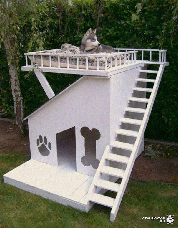 наблюдательный пост для собаки над будкой