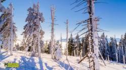 turbacz-rakiety-sniezne-2017-otwarty-horyzont-40
