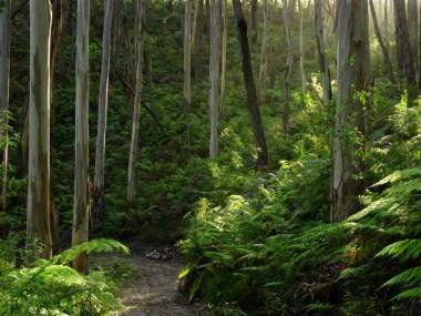 glenaire-park-tall-timbers-trail