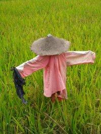 Vietnamese scarecrow