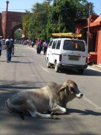 Indian road block