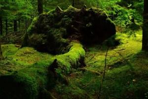 森林/癒し
