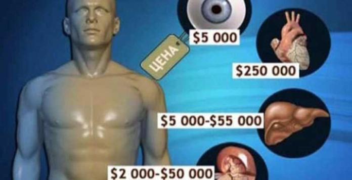 человеческие органы
