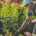 Plan Before You Plant: 4 Tips for Effective Landscaping