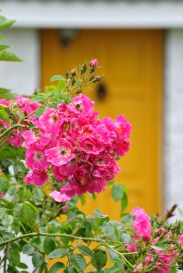 Pink and yellow... colour. So important to lift the spirit on a grey day