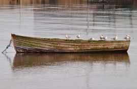 Ride to nowhere... gull style