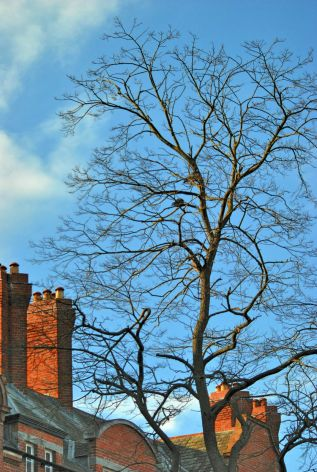 Blue sky HDR fun... tree and chimneys at trinity College, Dublin Ireland