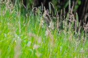 Tall meadow grasses? Is it safe to go there???