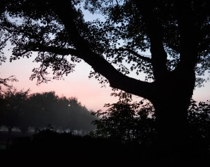 Misty autumn dawn... good for the soul!!