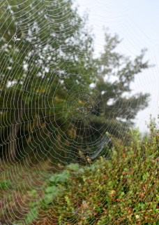 My... what a web you weave!!