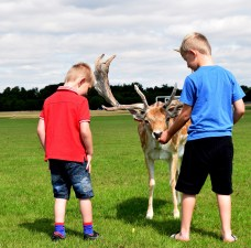Some trio... boys and deer!