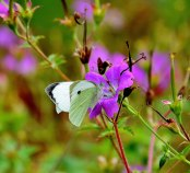 Butterfly and blooms... summer memories!!