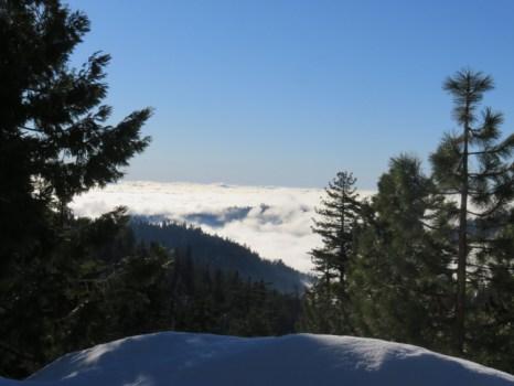 Le parc des Séquoias géants 2