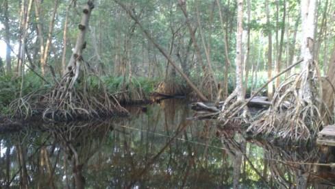 Tour dans les Mangroves Celestùn Mexique