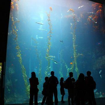 海生館門票全票::優惠價420元::屏東國立海洋生物博物館