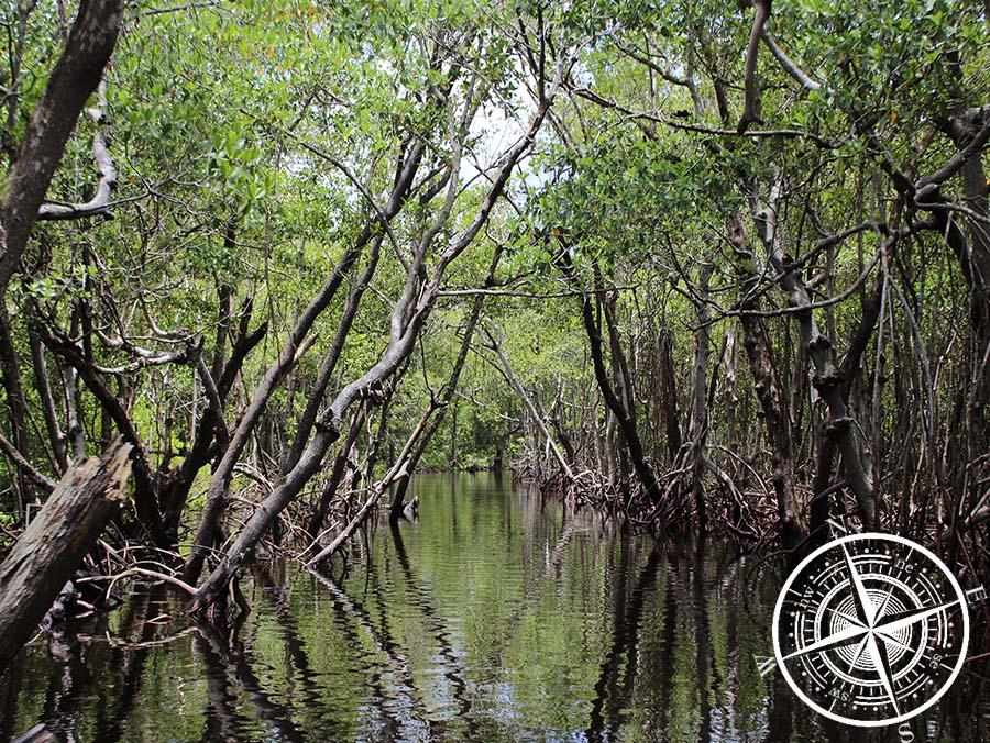 Hinein in den Mangrovenwald.