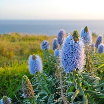 Wunderschöne Blumen auf Madeira