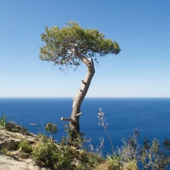 Wunderschöne Aussicht auf Mallorca