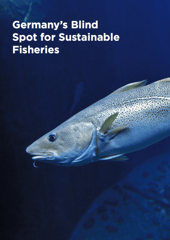 New report highlights Germany's blind-spot for sustainable fisheries