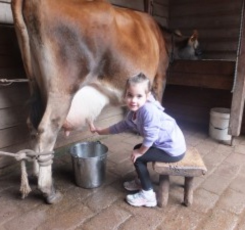 Keira milking the cow