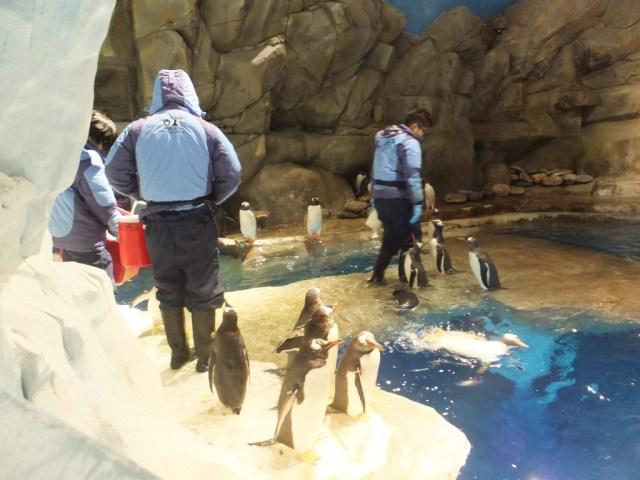 The Penguin Enclosure - really was impressive.