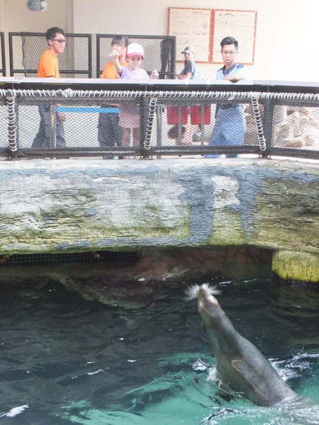 Keira feeding the seals. Less than $5AUD & all 3 had a go.