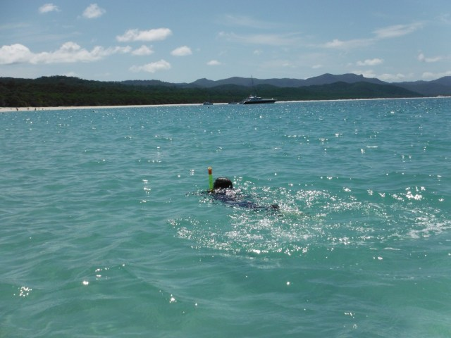 Snorkelling - Whitehaven Beach