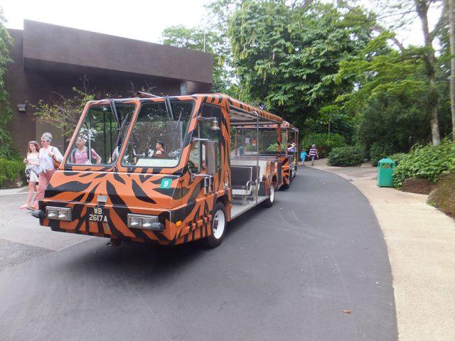 The Singapore Zoo Tram