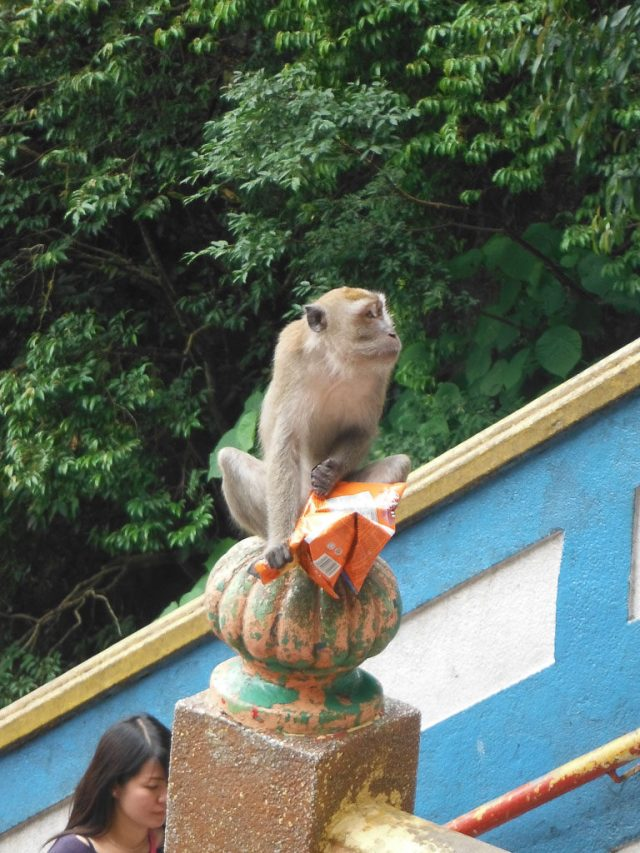 I really wish people wouldn't feed the monkeys, its very sad to see this.