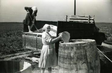 φτιάχνοντας λίπασμα στη λευκρορώσικη επαρχία τη δεκαετία του 60