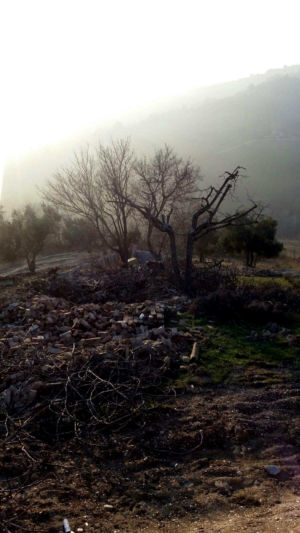 Cherry and Rubble of Ruin at the site of new construction in Le Marche