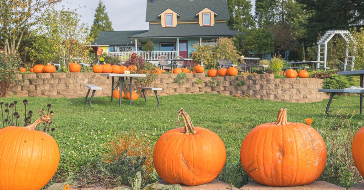 Plumper Pumpkin Patch Fun Things To Do In Portland Our Big Little Adventures