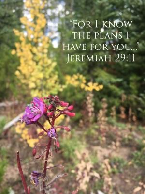 Our Boy Life   Jeremy 29:11