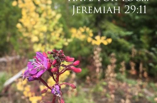 Our Boy Life | Jeremy 29:11