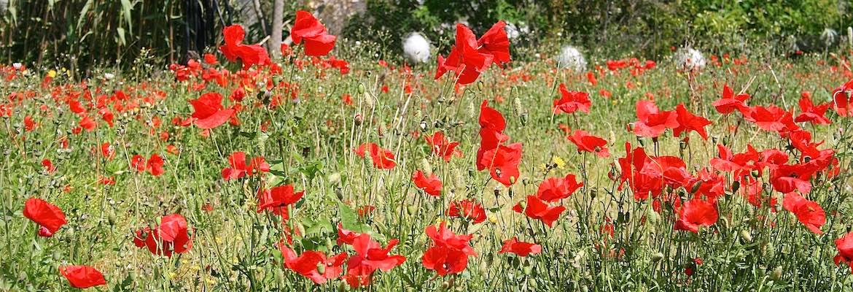 2014-05-07 at 09-51-34-Pompeii