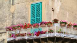 Colourful window boxes