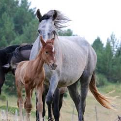 Wild horses near La Seu d'Urgell.