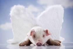 Pig's do fly!