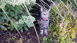 Dark tabby cat sits among plants.