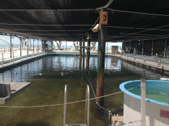 Old saltwater pool houses injured sea turtles