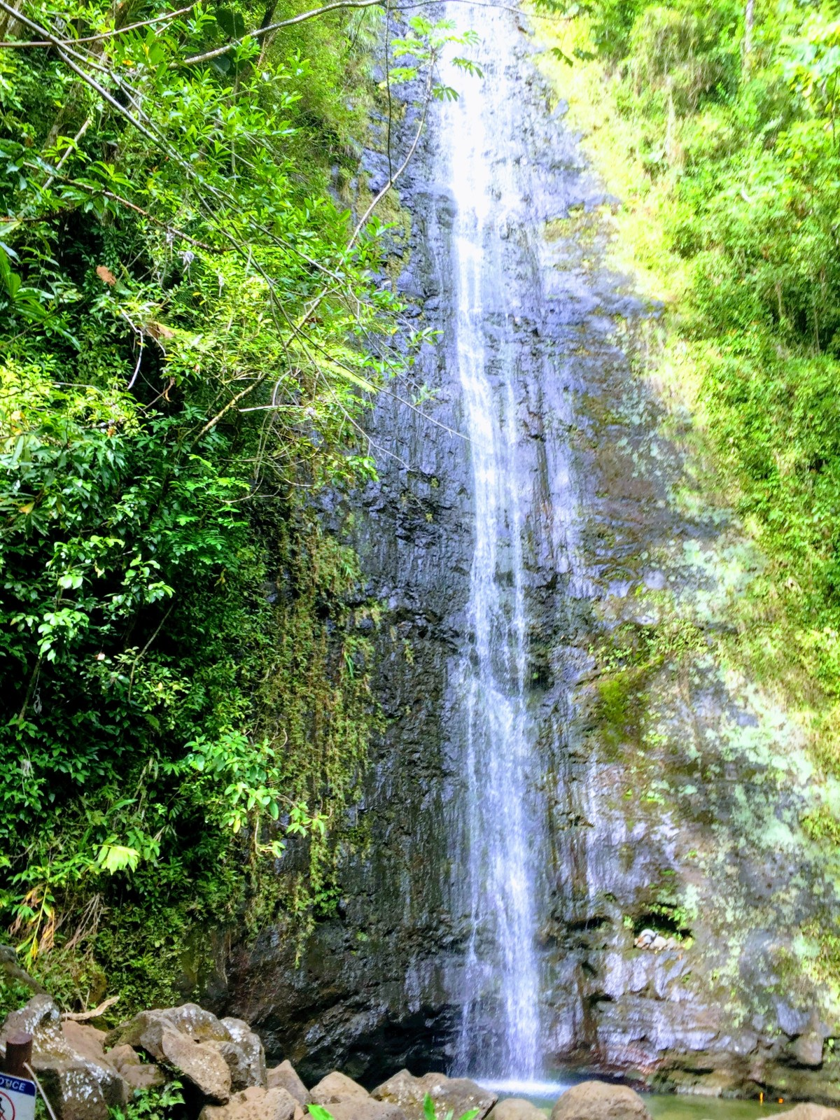 Manoa Falls: Birding for the Win!